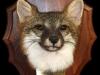 grey-fox-mask-on-plaque