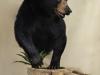 hl bear 2