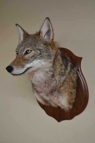 Coyote Mask 005